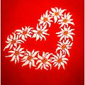 cuore Edelweiss