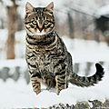 [GRIF' Informe] Attention, les chats ne portent pas de bottes de neige !