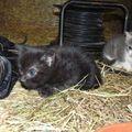 2009 10 13 Les deux petits chatons