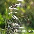 05062010herbeblanche