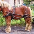Je me souviens des chevaux...