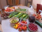 10-récolte du jour (4)