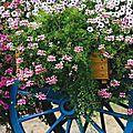 fleurs_65