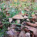 Joli cèpe d'été dans les feuilles...