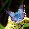 Butterfly (31)