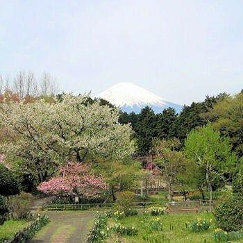 Japon le mont Fuji au printemps