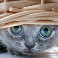Les chats (54)