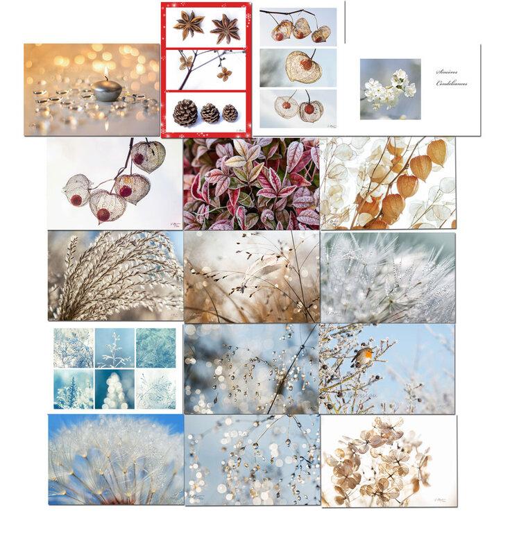 cartes-fleurs-ecologiques03