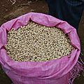 Bamenda:'<b>Kola</b> Coffee' Begging For Industrial Production