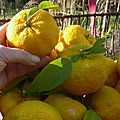 Le fruit dans tous ses états ...