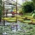 Le bassin aux nympheas tropicaux