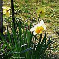 Fleurs de Léon 220218