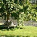Banc circulaire autour d'un arbre à Sasnières (41)