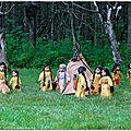 Les <b>bisons</b> sont de retour dans le secteur de la tribu