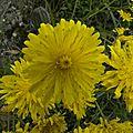 jaune (11)