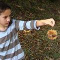 La cueillette des châtaignes
