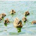 Les bébés de la nature...