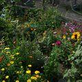 2009 08 18 Une partie de mon jardin