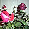 fleurs novembre 2013 004-1