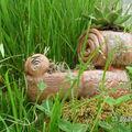 escargot chouette