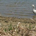 Lac Kir - Dijon - Avril 2007