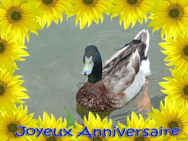 anniversaire-canard-encadrement-tournesols-carte-600-02