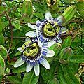 Fleurs de Leon 24061634