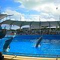 Field Trip au <b>Miami</b> <b>Seaquarium</b>