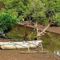 Mayotte (44)