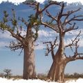 SeckasystemeDuo-Baobab_rs