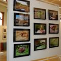 salon de la photo mairie de st omer 15 au 29 nov 2009