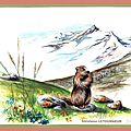 Marmotte des Alpes Animal à fourrure Ghislaine Letourneur Gouache - Marmot painting - Peinture animaux sauvages - Malerei von Murmeltier - Pittura di marmotta - Краска (Живопись) сурка - Vopsire de marmot - Pintura de marmota -
