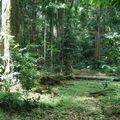 Quelques explications sur l'aspect environnemental de la gestion durable des forêts tropicales dans le Bassin du Congo