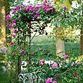 Les plantes du jardin - les sauges.