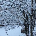 neige hiver 2010 / 2011