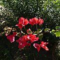 Deuwième fleur rouge