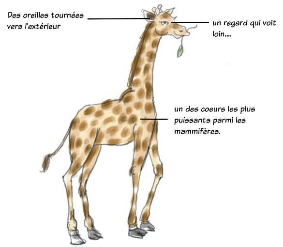 les chacals sont des girafes qui ont un probleme de langage ensemble naturellement. Black Bedroom Furniture Sets. Home Design Ideas
