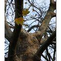Vision d'un arbre