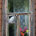 Les chats (117)