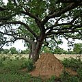 une termitière