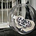 GP bulle devt cage