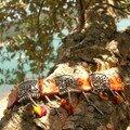 Bracelet arlequin (4ème vue)