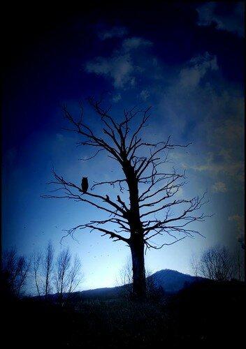 L'arbre 016 ret hib 2