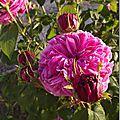 Windows-Live-Writer/jardin_6BD4/DSCF3647_thumb