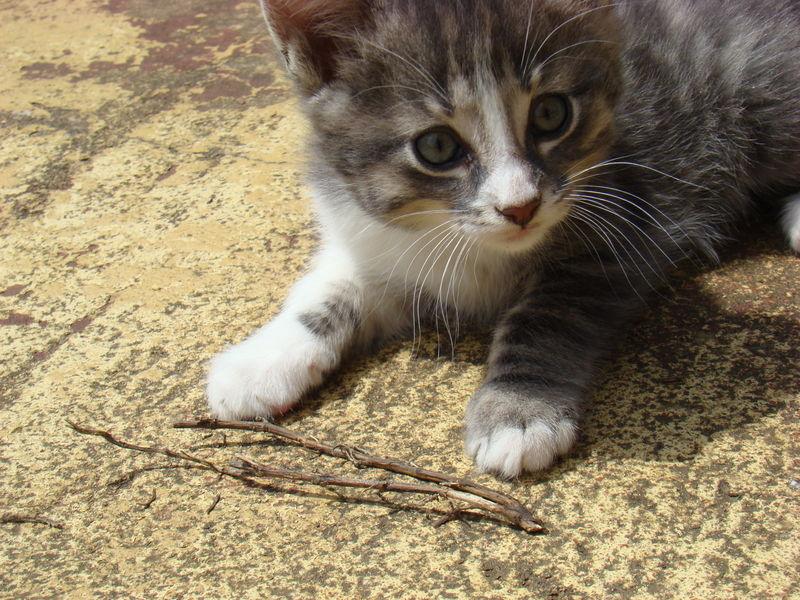 chaton kangourou, quand même sacré photo !