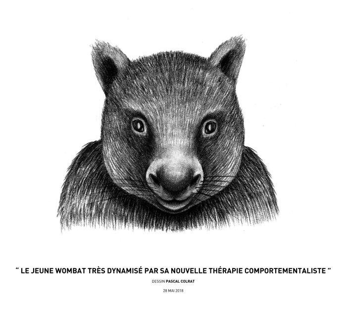 __le_jeune_wombat_tre_s_dynamise__par_sa_nouvelle_the_rapie_comportementaliste__