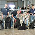 expo canine internationale de BEZIERS 16/06/2013