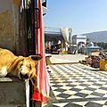 près des gaths - Pushkar