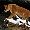 lionner1rw6hhbo1_500