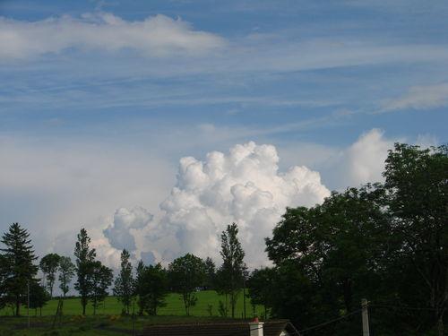 2008 06 10 Magnifique bourgeonnement